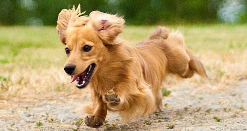 犬 散歩コース