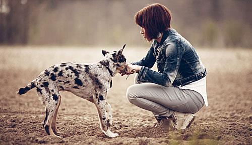 犬 コミュニケーション