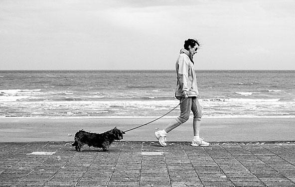 散歩 注意点